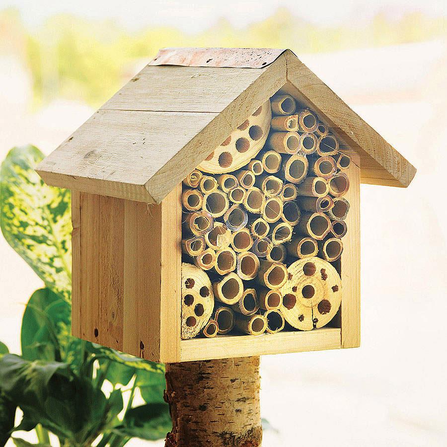 Envirohub original bee hotel flower seeds for bees