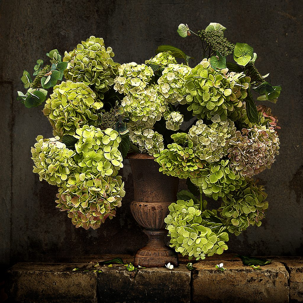 Paula Petherick - The Green Hydrangea