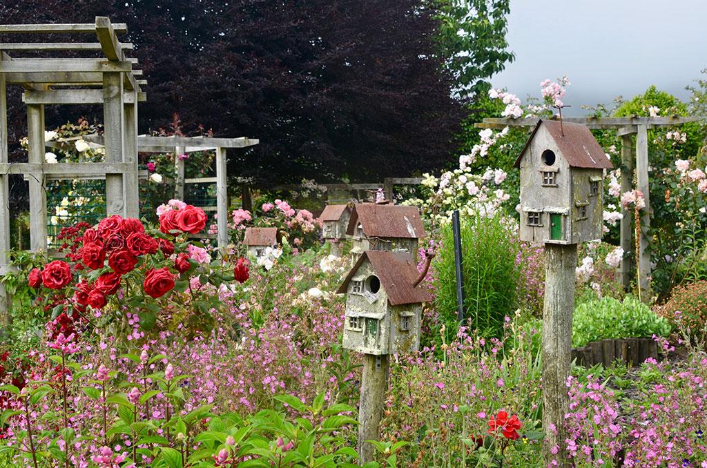 garden Colleen Thwaites